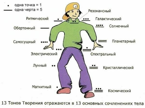 Соответствие частей тела 13 тонам Творения
